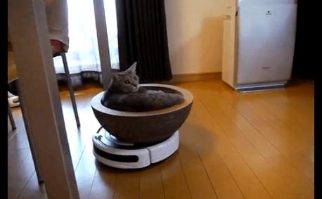 [試] 笑いハック | ルンバでくつろぐ猫