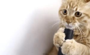 [試] 笑いハック | 猫と掃除機
