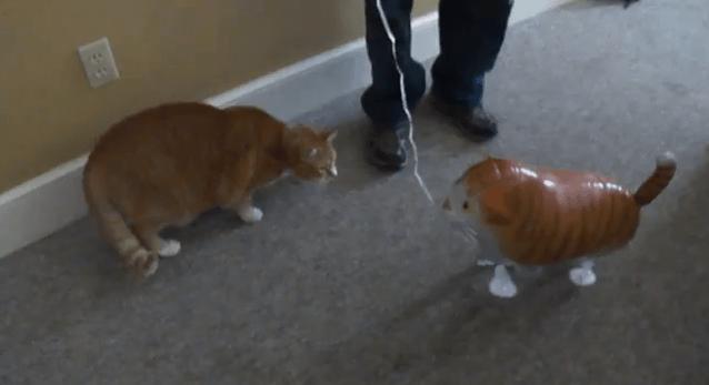[試] 笑いハック | 飼い猫 vs 猫の風船