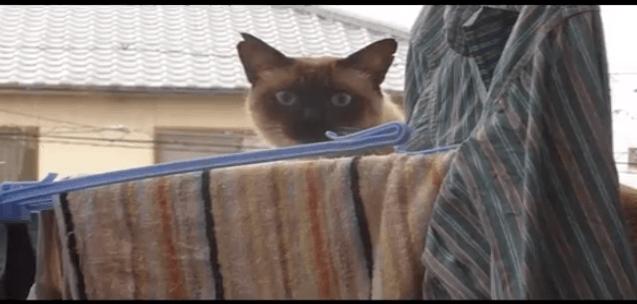 [試] 笑いハック | 猫のジャンプ大失敗