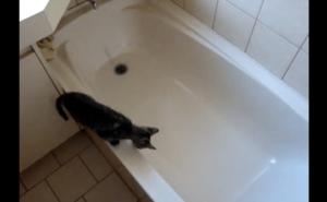 [試] 笑いハック | 浴槽に落ちる猫