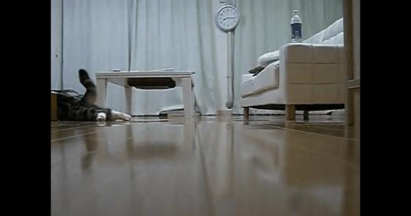 [試] 笑いハック | 滑り込む猫