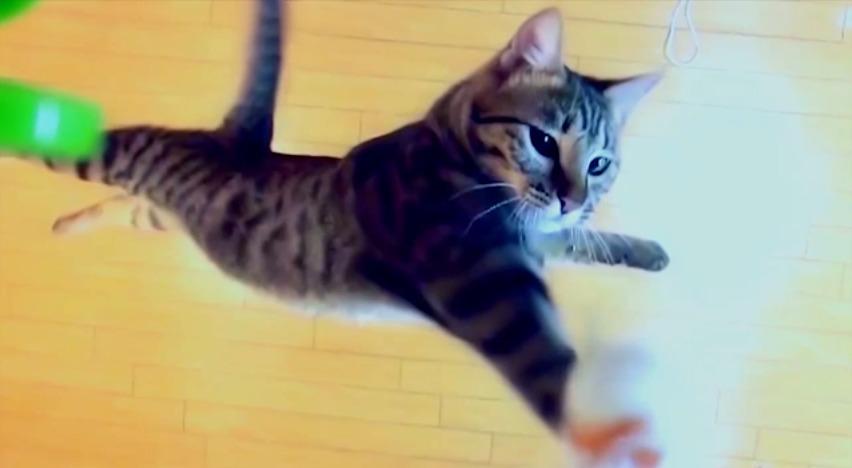 [試] 笑いハック | けしからん猫の垂直跳びには敵わない