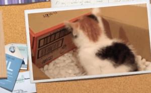 [試] 感動ハック | 子猫を保護した一ヶ月間の記録
