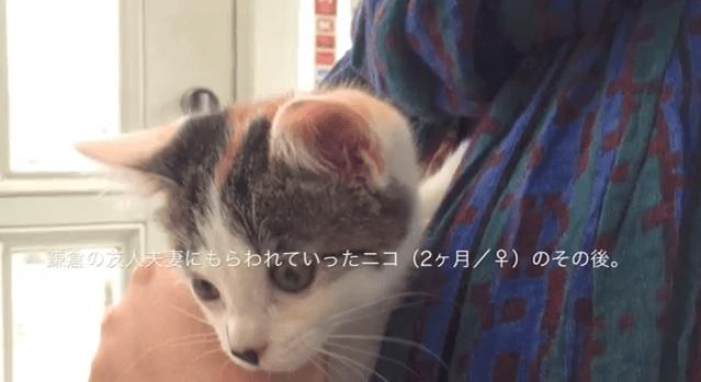[試] 感動ハック | 子猫を里親に出した一年後の記録